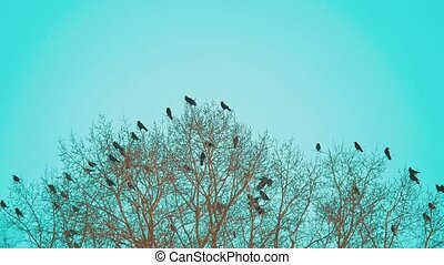 flock autumn of birds crows blue sky taking off from a tree. a flock of crows black bird dry tree . birds ravens in the sky lifestyle . a flock of crows concept