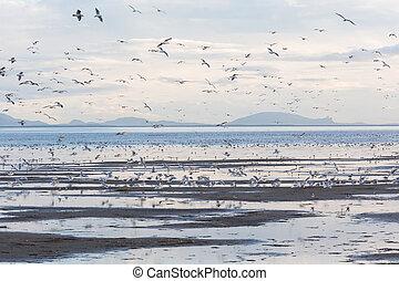 flock flying gulls