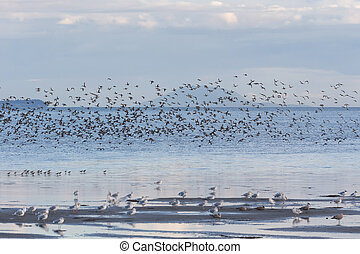 flock flying gulls