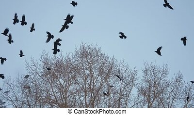 flock of autumn birds taking off from a tree, a flock of crows black bird dry tree. birds ravens in the sky