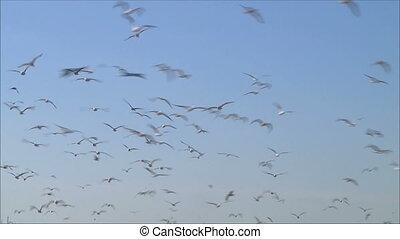 flock of birds 2
