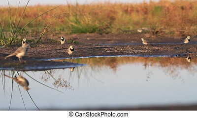 flock of birds at a watering hole