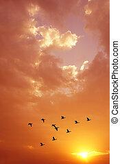 Spring or autumn migration of cranes vertical image