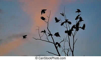flock of birds autumn taking off from a tree, a flock of crows black bird dry tree. birds ravens in the sky sunset orange silhouette