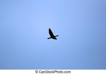 Flock of Birds - Cormorant Against Blue Sky. Over Vardar...