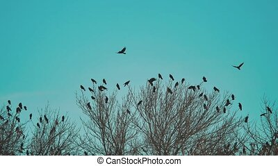 flock of birds crows blue lifestyle sky autumn taking off...