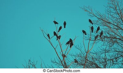 flock of birds crows blue sky autumn taking off from a tree....