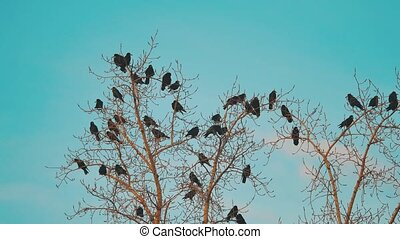 flock of birds crows blue sky autumn taking off from a tree. a flock of crows black bird dry tree. lifestyle birds ravens in the sky. a flock of crows concept