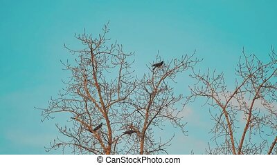 flock of birds crows blue sky autumn taking off from a tree. a flock of crows black bird dry tree lifestyle. birds ravens in the sky. a flock of crows concept