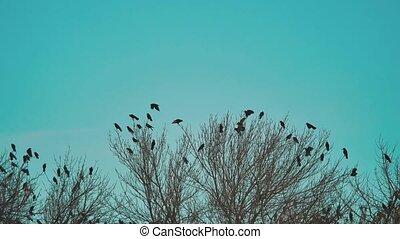 flock of birds crows lifestyle blue sky autumn taking off from a tree. a flock of crows black bird dry tree . birds ravens in the sky. a flock of crows concept