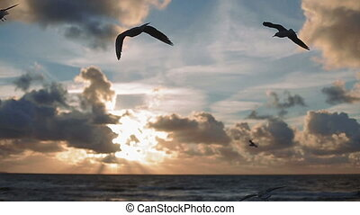 Flock of birds feeding by hand Seagulls sunset on the sea -...
