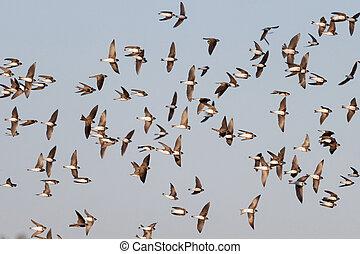 flock of birds flies beautifully across the sky