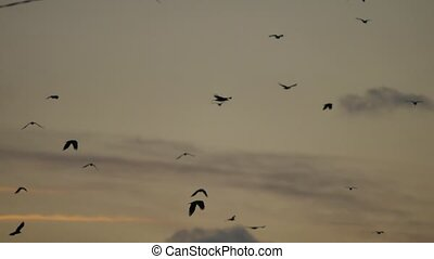 flock of birds flies in the sky at sunset. a flock autumn of...