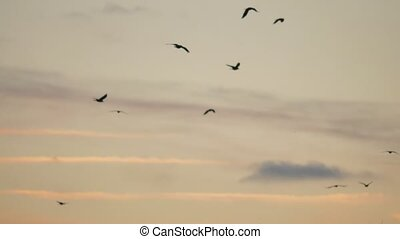 flock of birds flies in the sky at sunset. a flock of autumn...