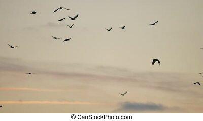 flock of birds flies in the sky at sunset. a flock of birds...