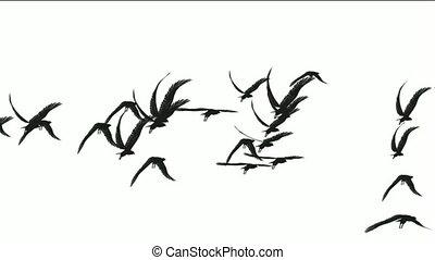 flock of birds fly over, migratory