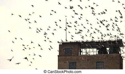 Flock of birds flying away, slow motion. Old abandoned...