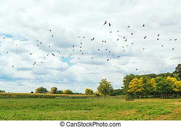 Flock of birds flying over empty field