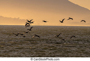 Flock of birds flying over the Pacific Ocean silhouette