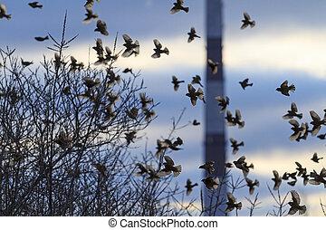 flock of birds in backlit