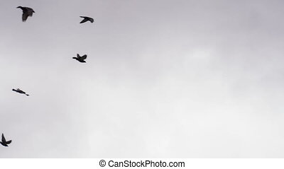 Flock of Birds in the Cloudy Sky