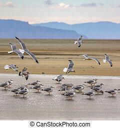 Flock of birds in the Great Salt Lake in Utah