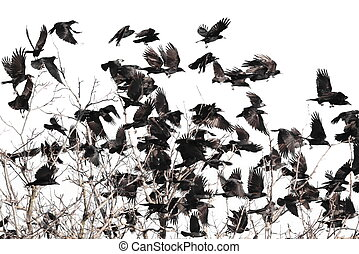 flock of birds isolated on white background and texture, ( ...