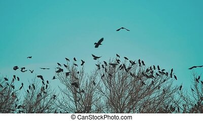 flock of birds lifestyle crows blue sky autumn taking off...