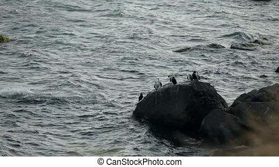Flock of birds on a rock