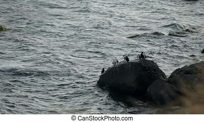 Flock of birds on a rock
