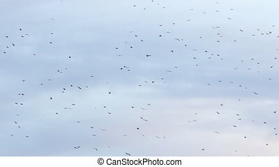 Flock of birds on blue sky with clouds