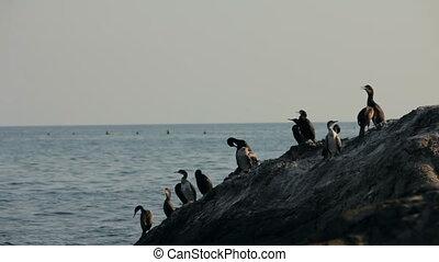 Flock of birds on the beach