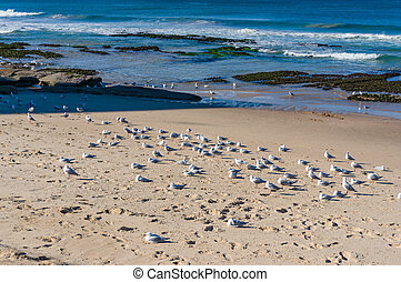Flock of birds on the beach