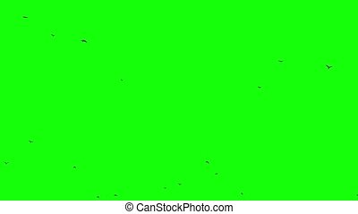 Flock of birds rises from the horizon up to sky Seamless Loopable footage chroma key composition object