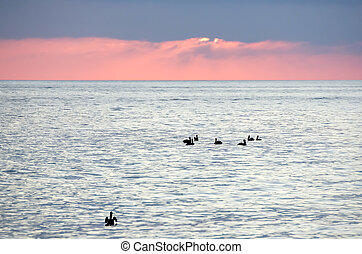 Flock of Birds Silhouette Ocean