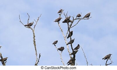 flock of birds sit on the dry branches