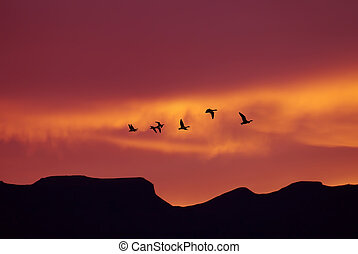 Flock of birds spring or autumn migration