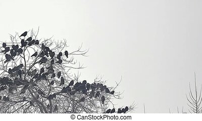 flock of birds taking crow off from a tree, flock of crows black bird dry tree