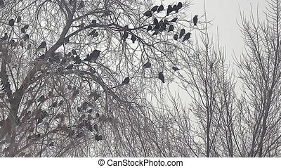 flock of birds taking off crow from a tree, flock of crows black bird dry tree