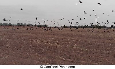Flock of Birds Taking Off - Flock of birds taking of from...