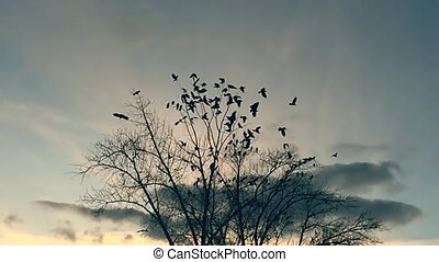 flock of birds taking off from a tree, a flock of crows black bird dry tree. birds ravens in the sky slow motion