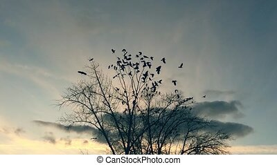 flock of birds taking off from a tree, a flock of crows...
