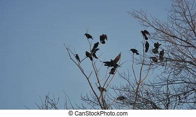 flock of birds taking off from a tree, flock of crows black bird dry tree. birds ravens in the sky