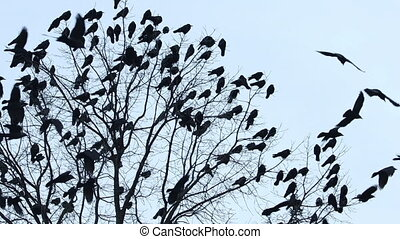 flock of black birds flies and sits on a slow motion tree