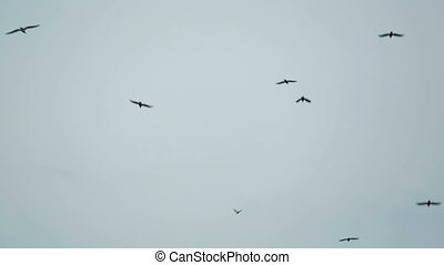 Flock Of Black Birds Flying Free In The Sky