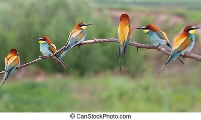 flock of colored birds sitting on a branch