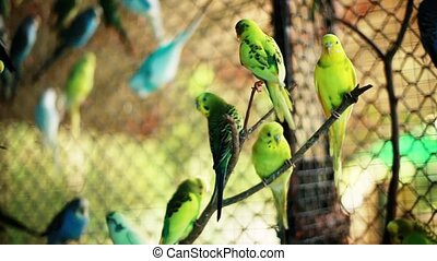 Flock of colorful parrots on a branch.