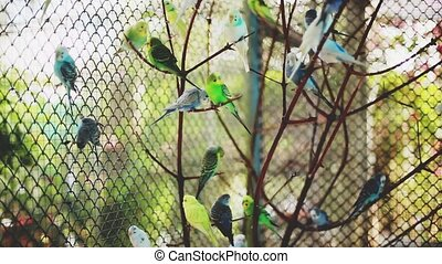 Flock of colorful parrots on a branch. hd,