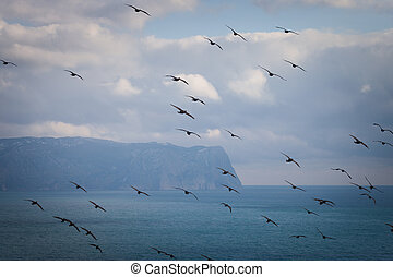 Flock of cormorants in flight on a background of the...