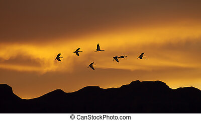 Flock of cranes spring or autumn migration
